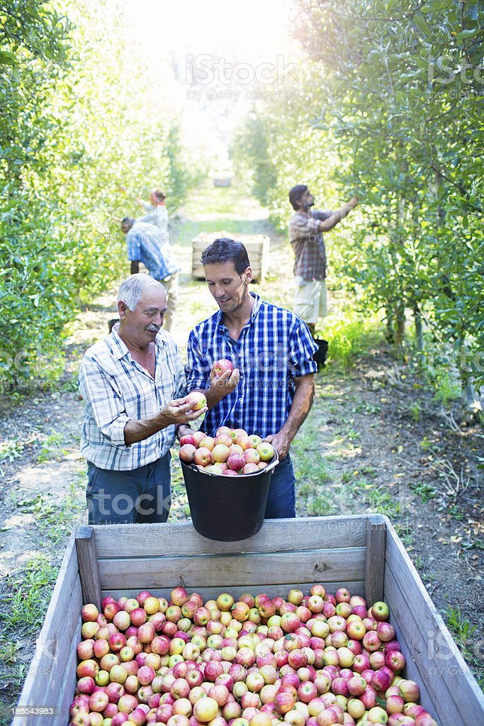Wise old farmer royalty-free stock photo