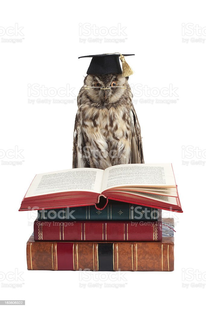 wise owl royalty-free stock photo