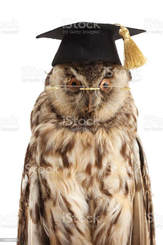 wise owl portrait stock photo