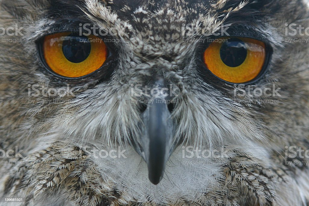Wise royalty-free stock photo