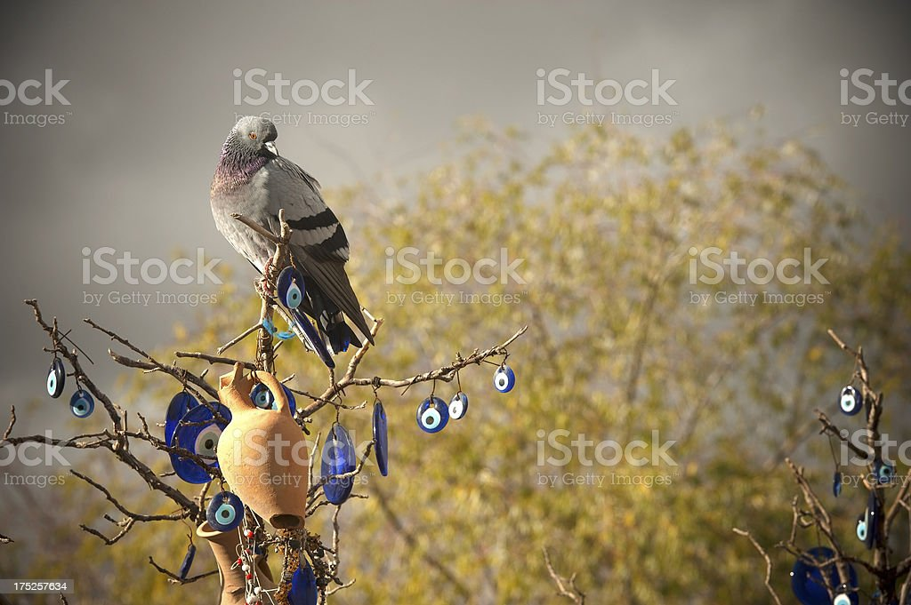 Wish Tree stock photo