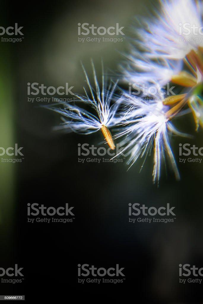 wishes... stock photo