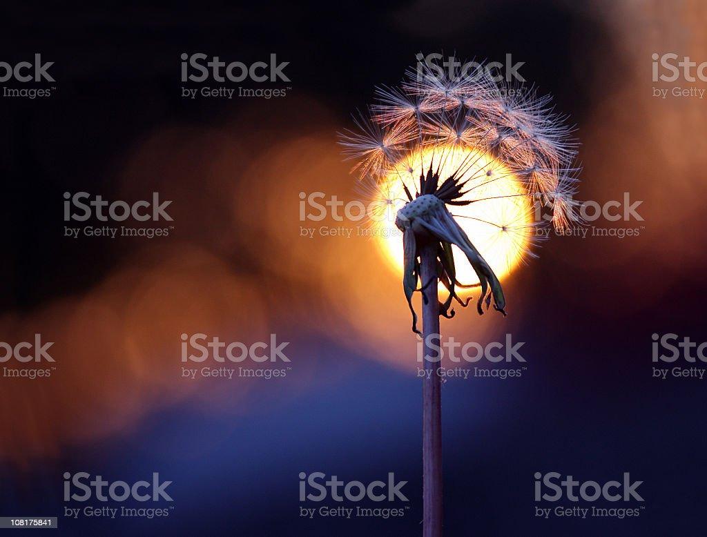 Wishful Sunset stock photo