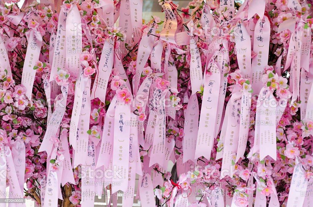 Wishing cherry tree royalty-free stock photo