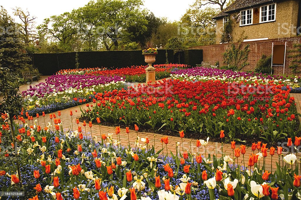 Wisley tulips royalty-free stock photo