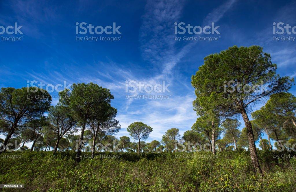 Wispy Clouds and Lush Foliage stock photo