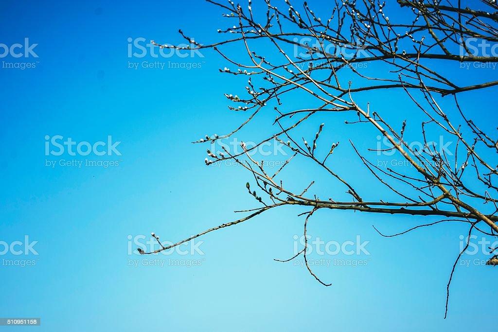 Wispy tree branch against blue sky. stock photo