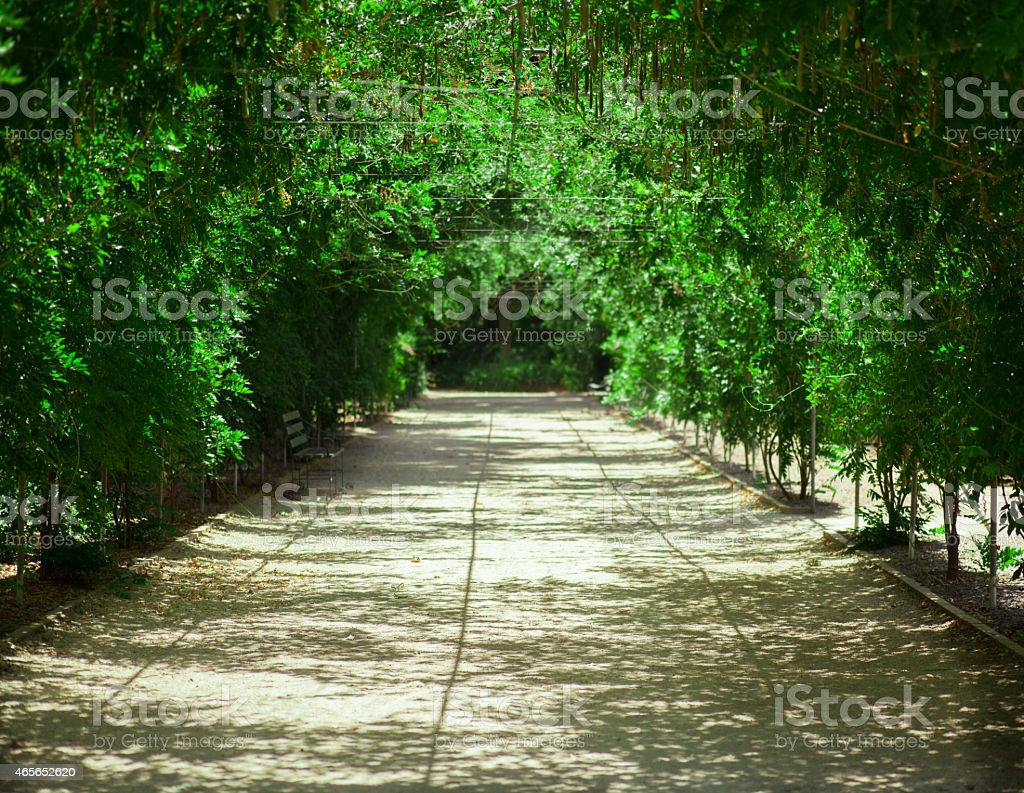Wisteria Arbour stock photo