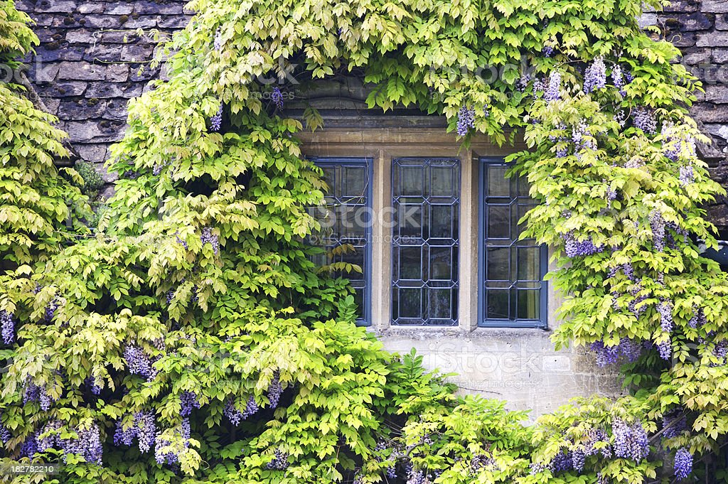 Wisteria covered window royalty-free stock photo