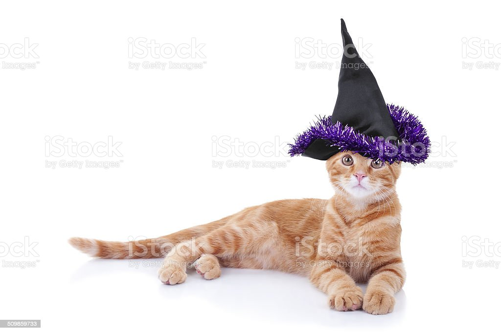 Witch Cat stock photo