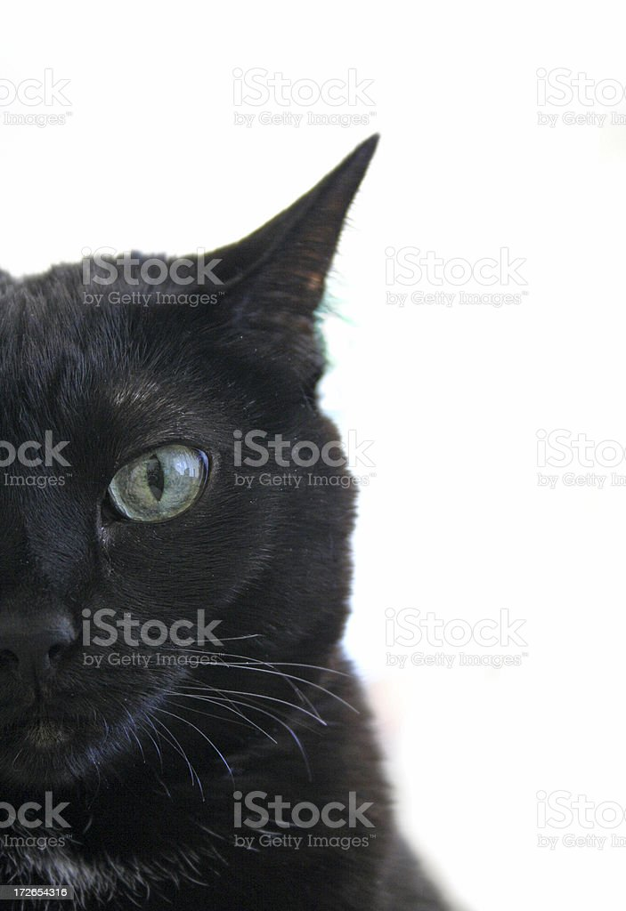 Witch's Companion - Black Cat royalty-free stock photo