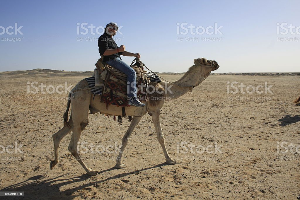 with camel in the desert stock photo