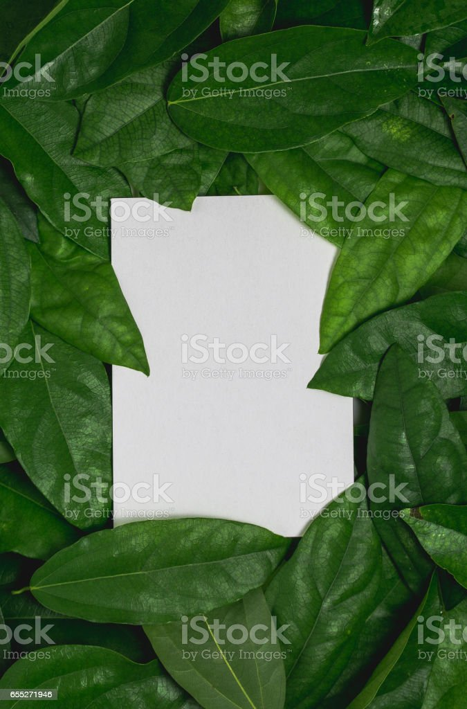 with paper card on green leaf. stock photo