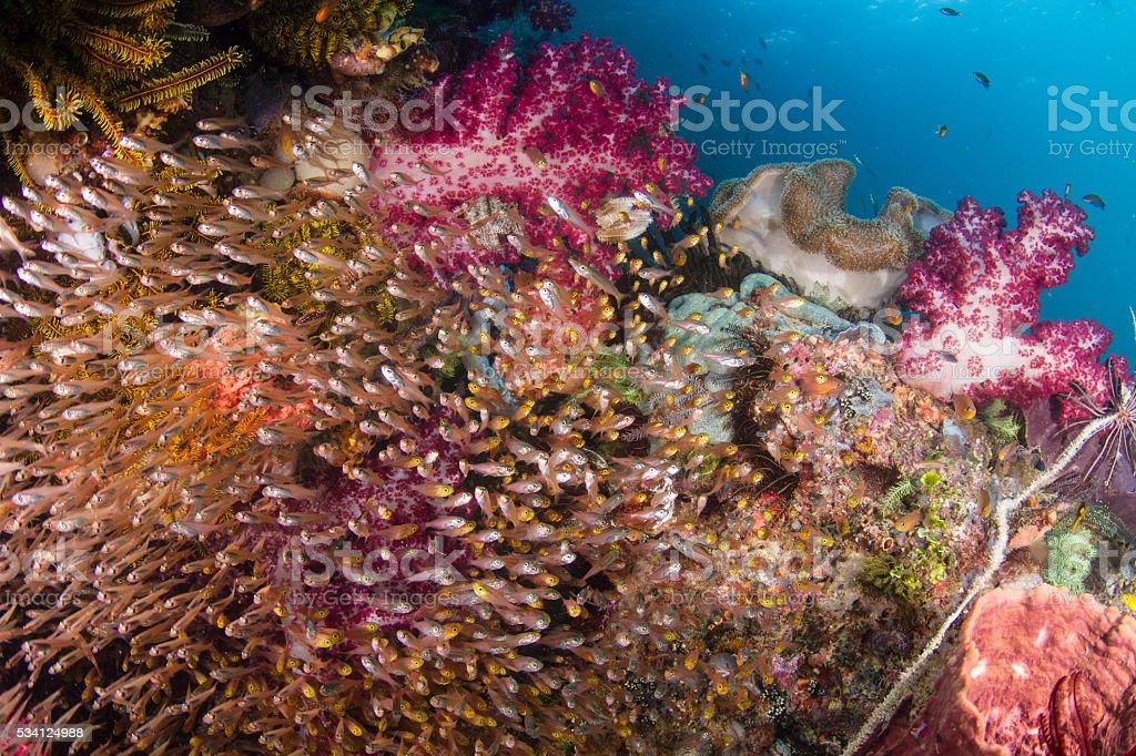 WA CU with Schooling Fish stock photo