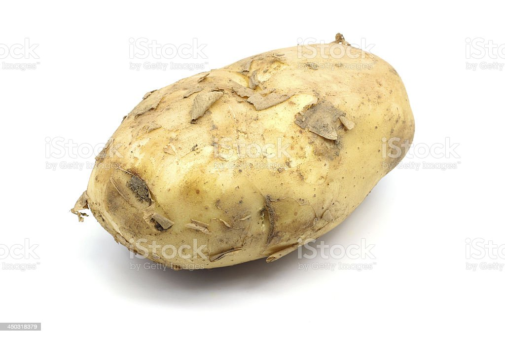 With the soil of potato stock photo