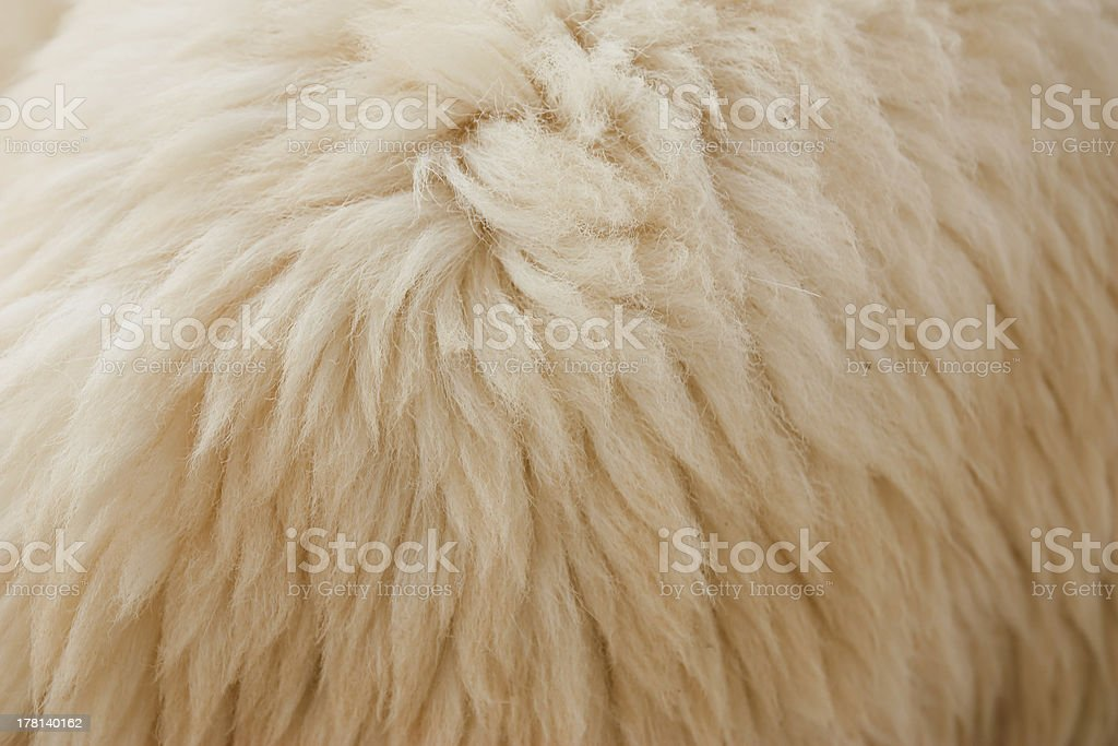 With Wool royalty-free stock photo