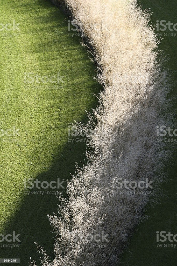 withe reed royalty-free stock photo