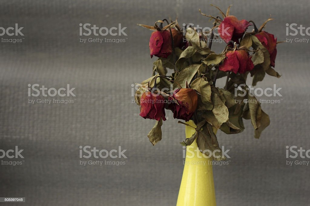 wither rose, died roses stock photo