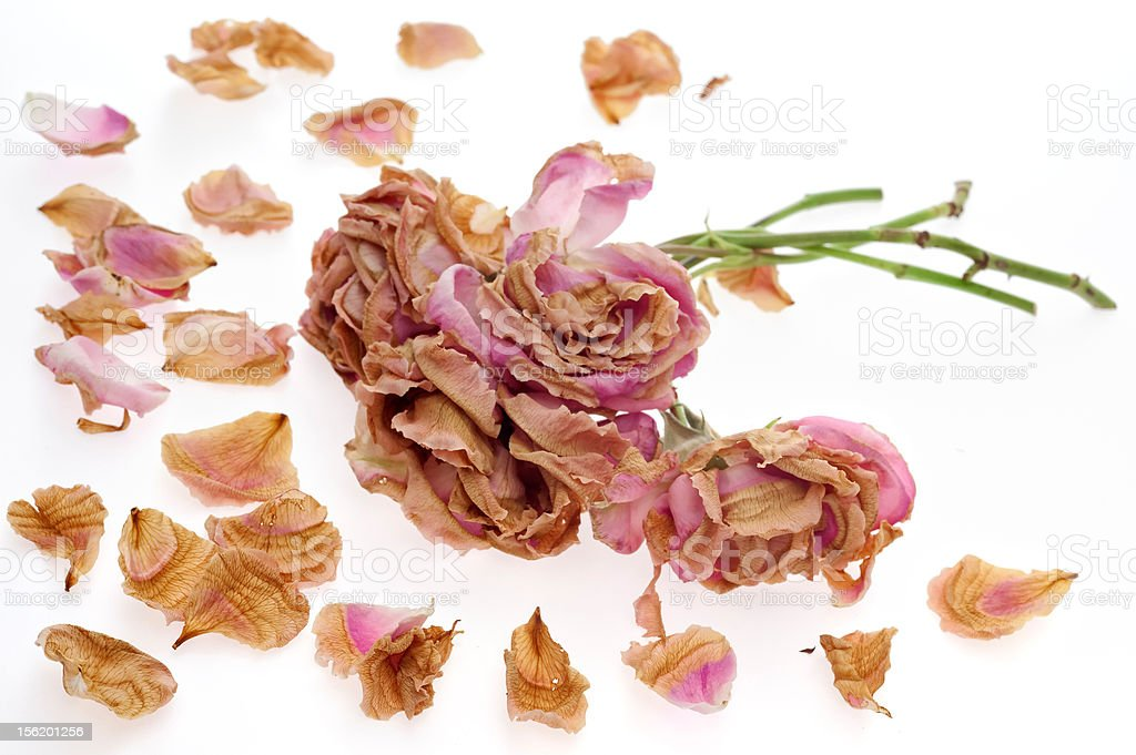 Withered bouquet stock photo