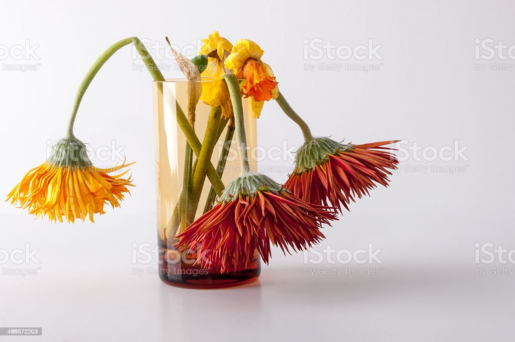 Withered flowers stock photo