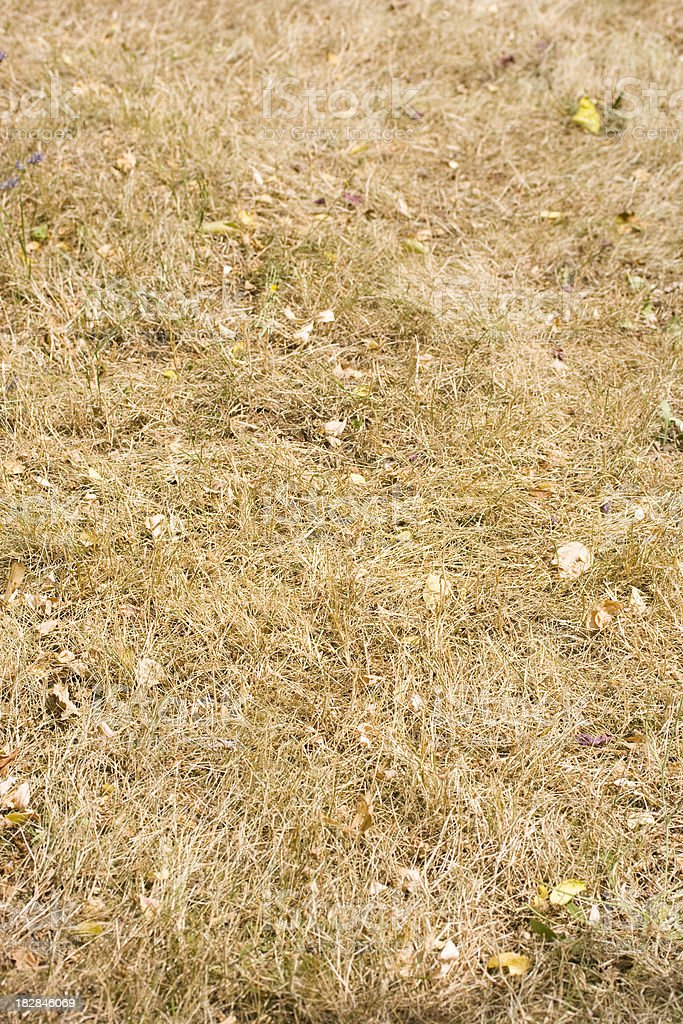 Withered grass stock photo