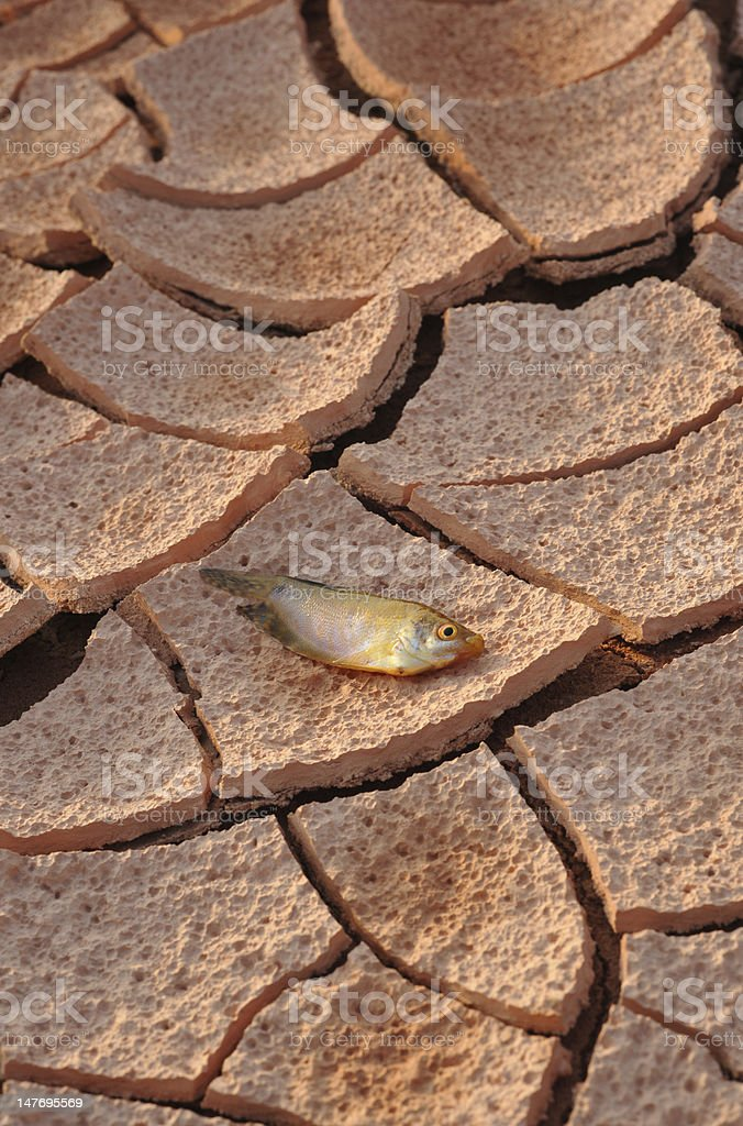 Withered land stock photo