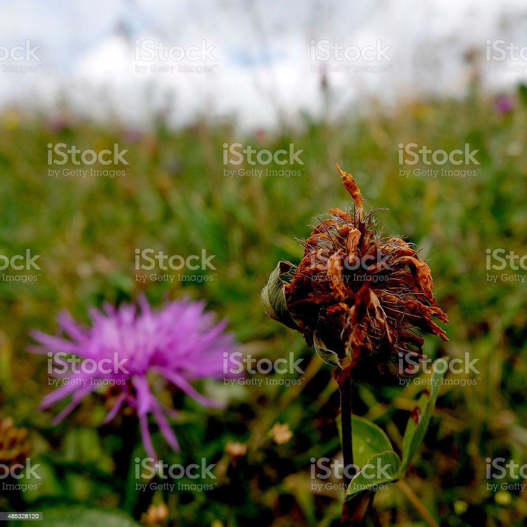 Withered stock photo