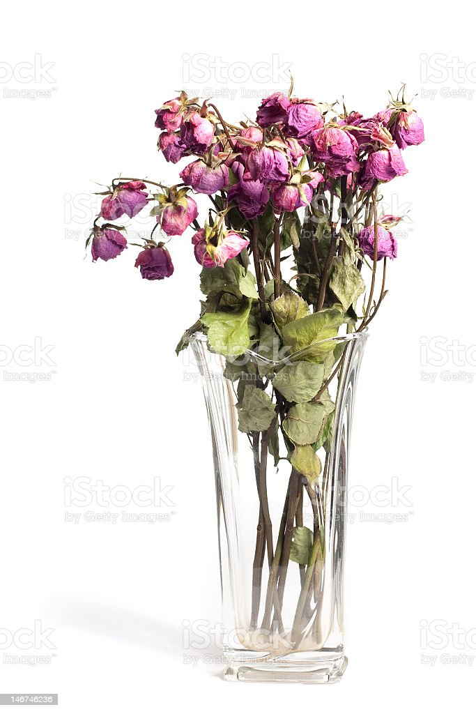Withered roses in a glass vase with no water stock photo