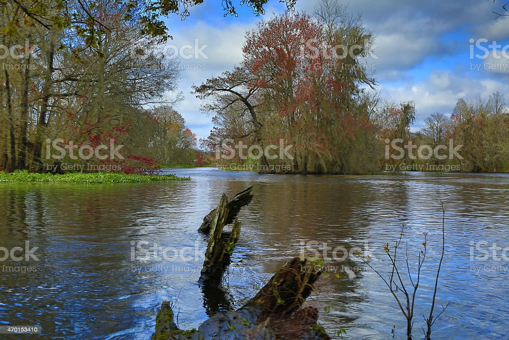 Withlacoochee River stock photo