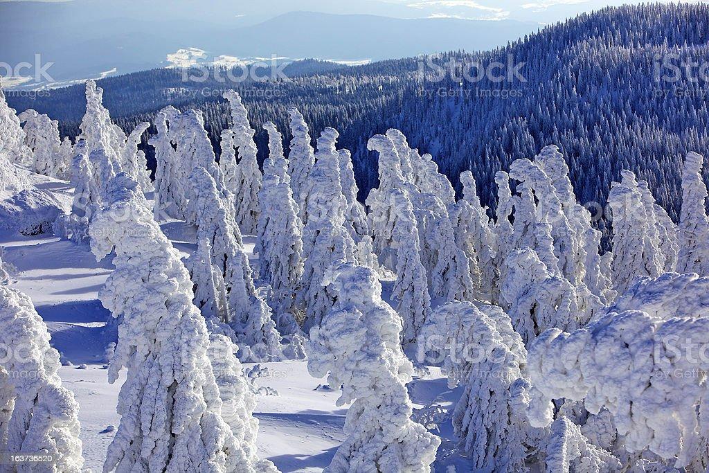 Wnterlandschaft im Bayerischen Wald stock photo