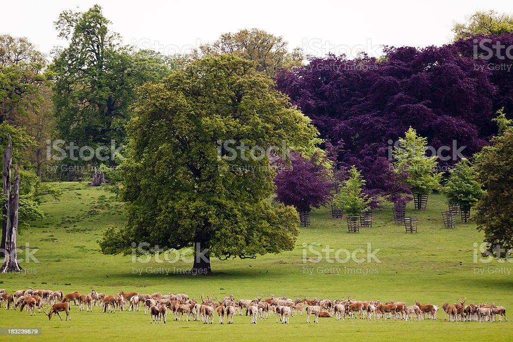 Woburn Park stock photo