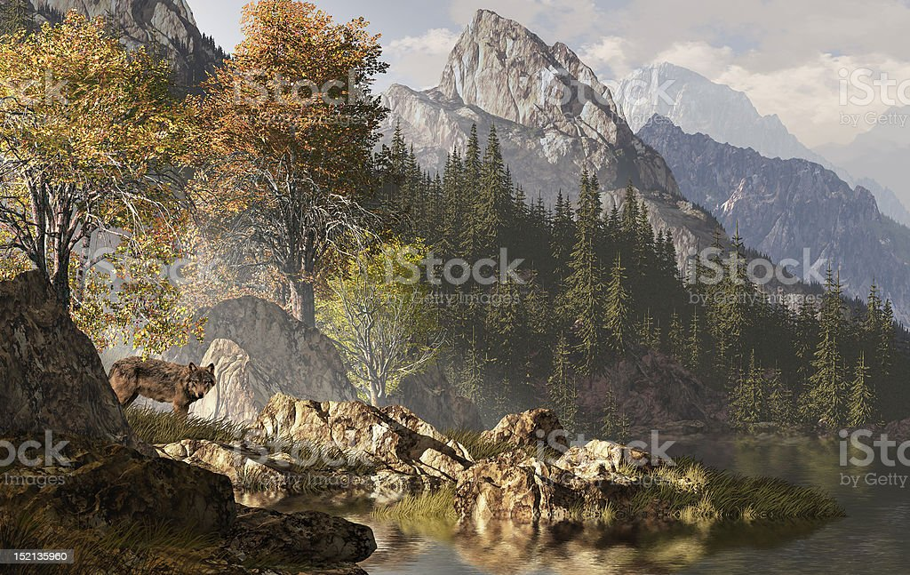 Wolf And The Rocky Mountains stock photo