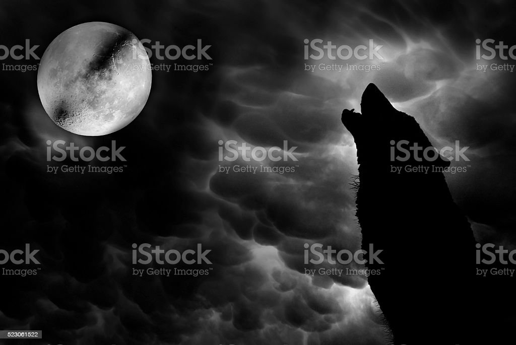 Wolf howling at moon illustration stock photo