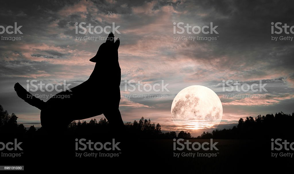 Wolf howling at the Moon Silhouette stock photo