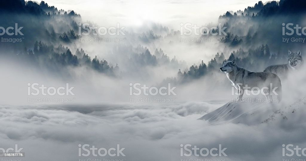 wolf  foto stock royalty-free