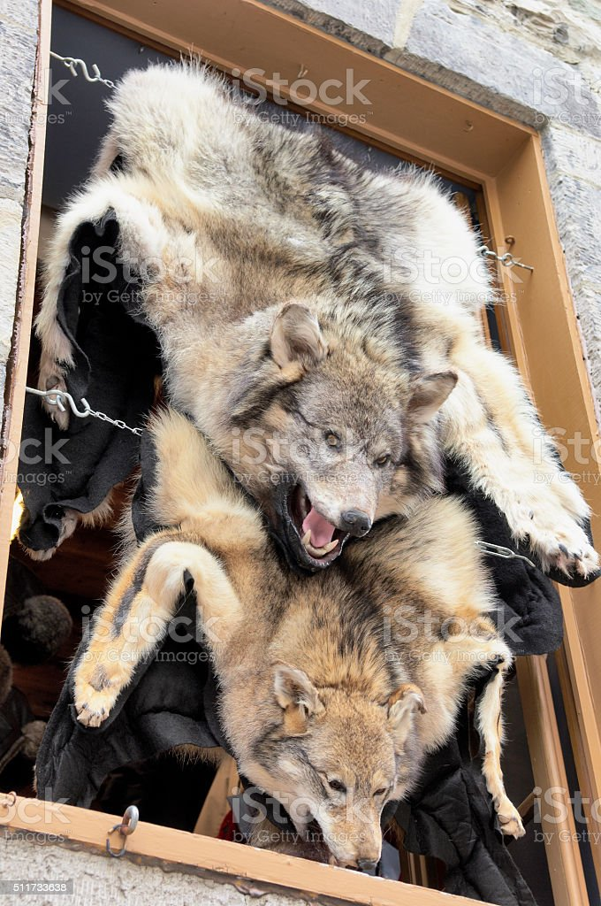 Wolf skin draped over a stall at Quebec street shop stock photo