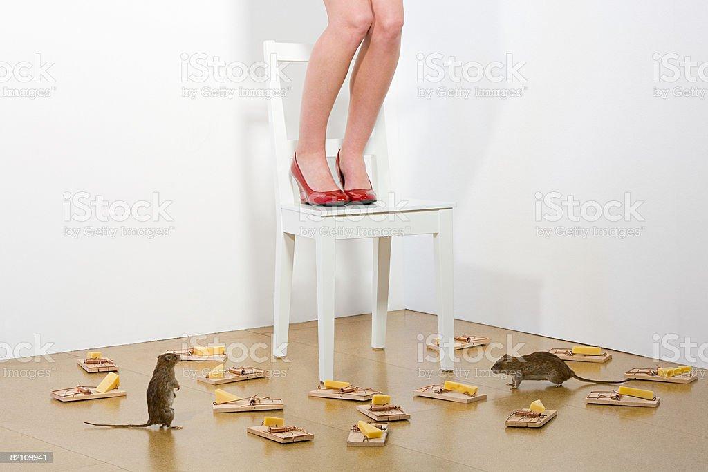 Woman afraid of rats stock photo
