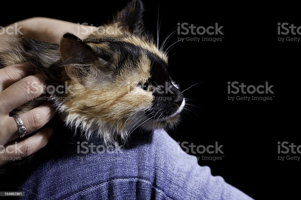 Woman and Cat: Animal Love/relaxation stock photo