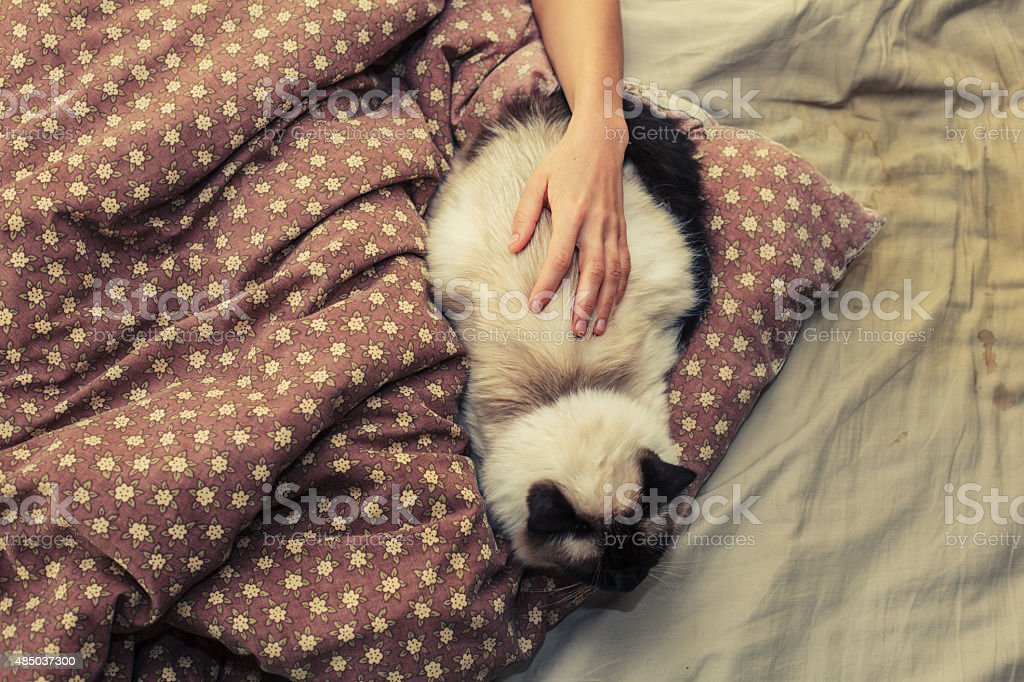 Woman and cat in bed stock photo