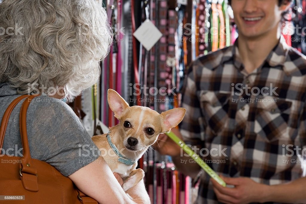 Woman and chihuahua in pet shop stock photo