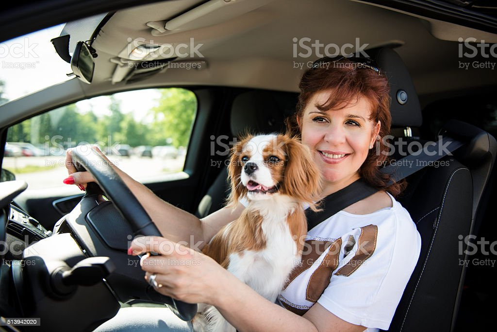 Woman and dog driving car stock photo