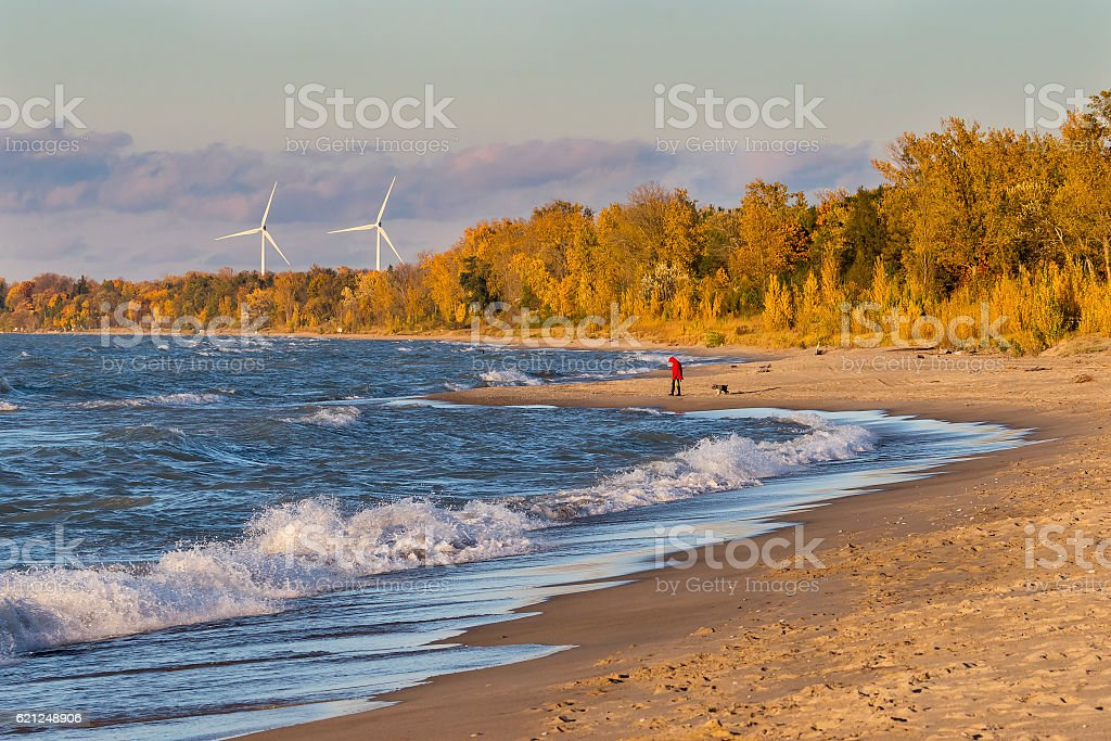 Woman and Dog on Beach with Wind Turbines in Background stock photo