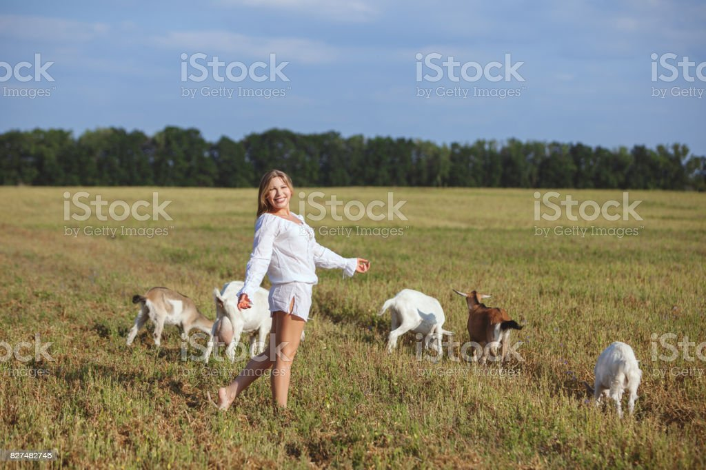 Woman and goats are walking around the field. stock photo