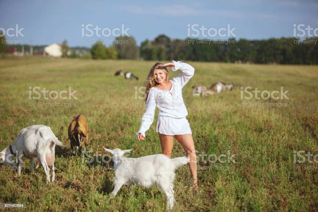 Woman and goats in the field. stock photo