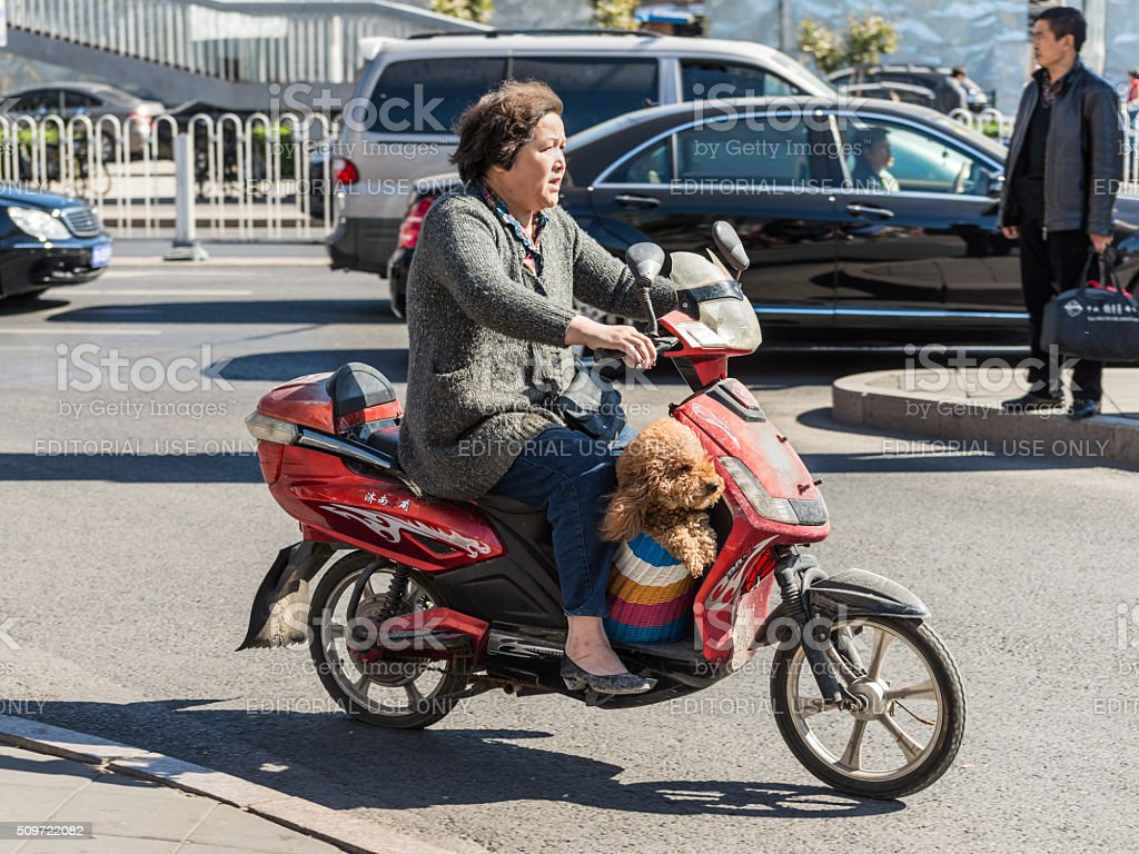 Woman and her dog on a scooter stock photo