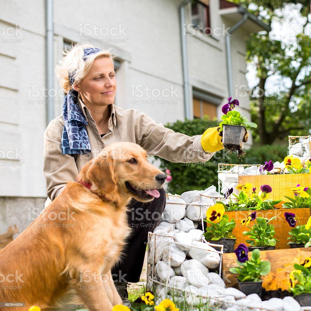 Woman and her Dog stock photo