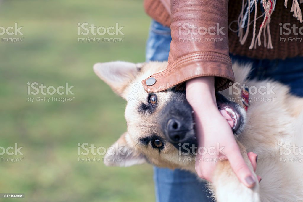 woman and her small Mixed-breed dog, friends stock photo