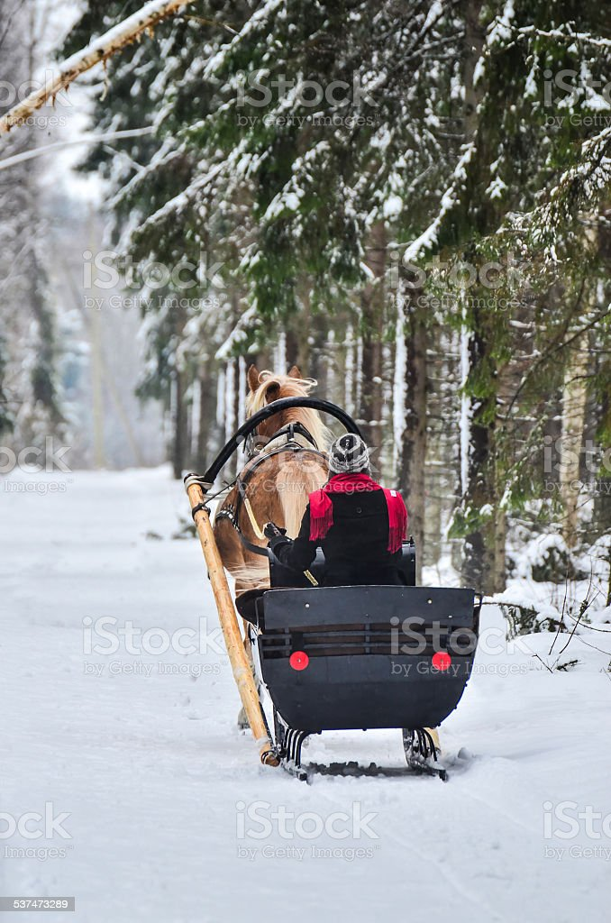 Woman and horse in forest stock photo