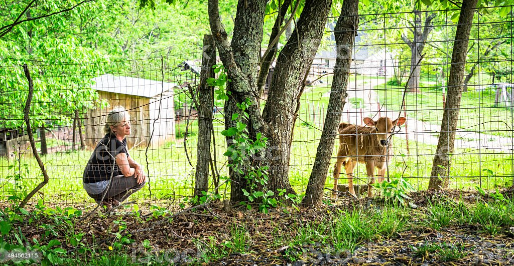 Woman and Jersey Calf on the Farm royalty-free stock photo