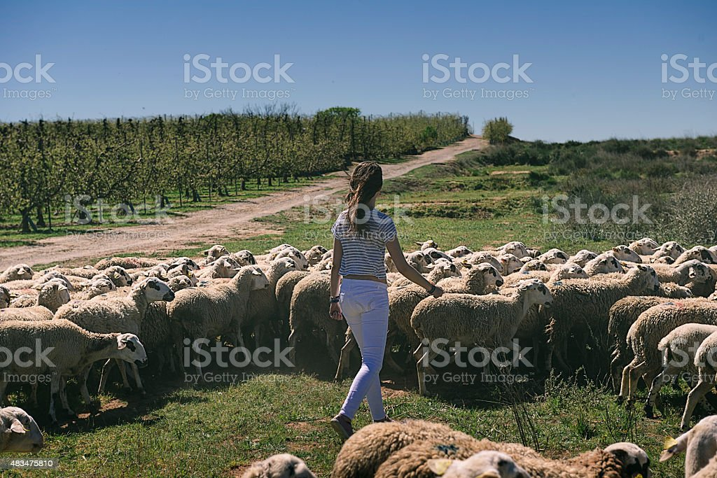 Woman and lambs outdoors stock photo